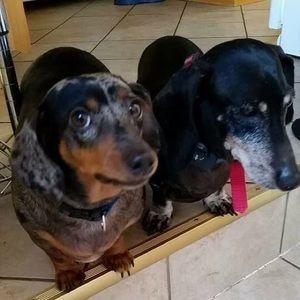 Pups say hello!